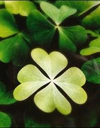 7-formas-de-conseguir-ou-construir-boa-sorte