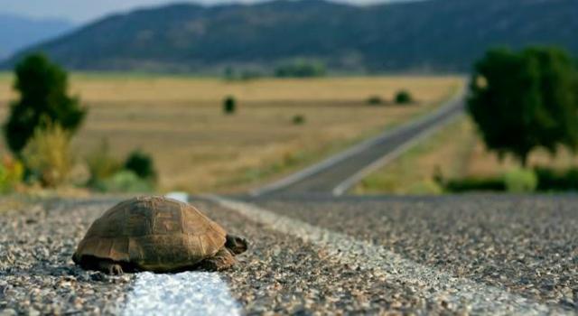 turtle-road
